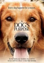 Šuns tikslas DVD