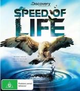 Gyvenimo greitis Blu-ray